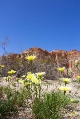 Life in Red Rock Canyon